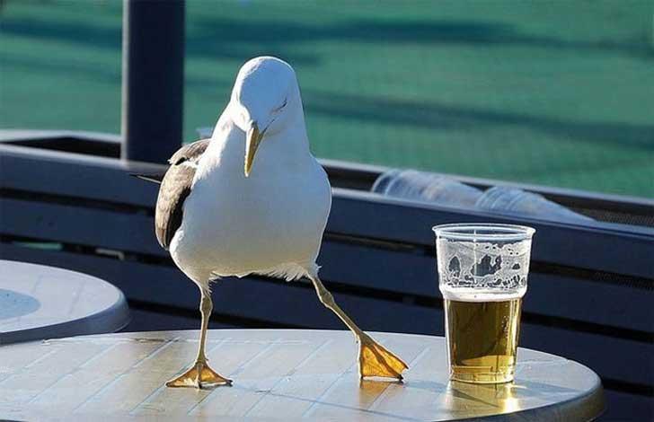 Seagull wine