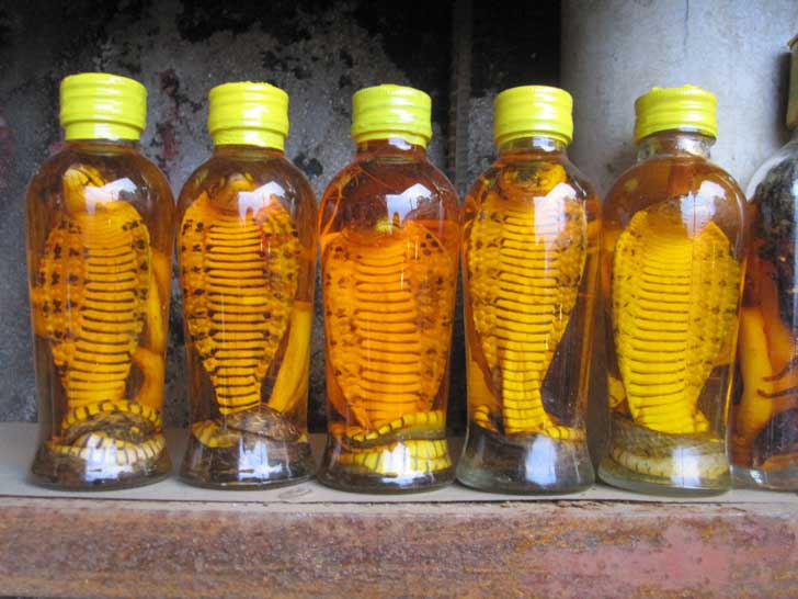 Drinking a Shot of Snake Whiskey in Laos