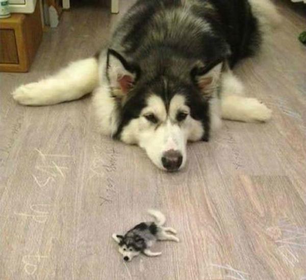 tiny-husky