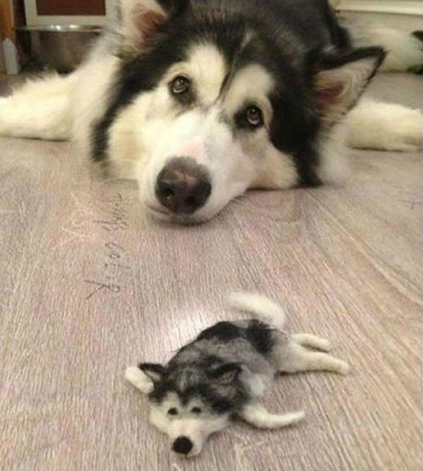 tiny-husky1