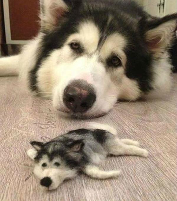 tiny-husky2