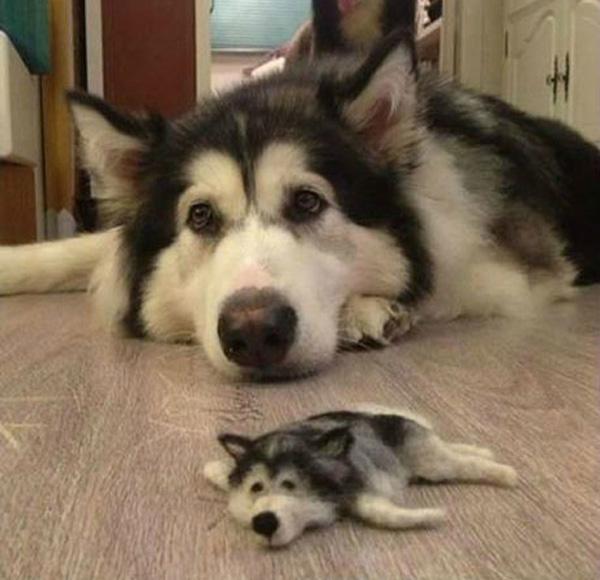 Guy Creates A Miniature Version Of His Husky Dog