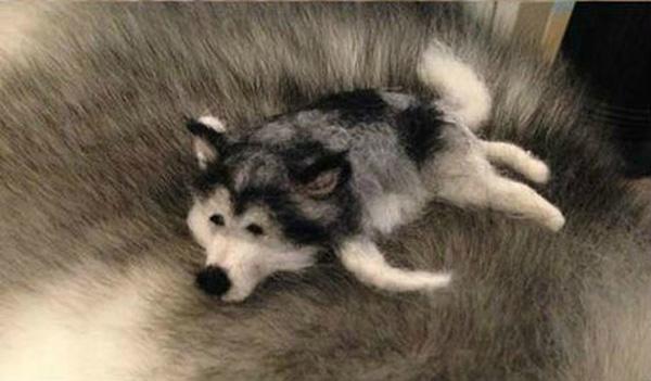 tiny-husky5