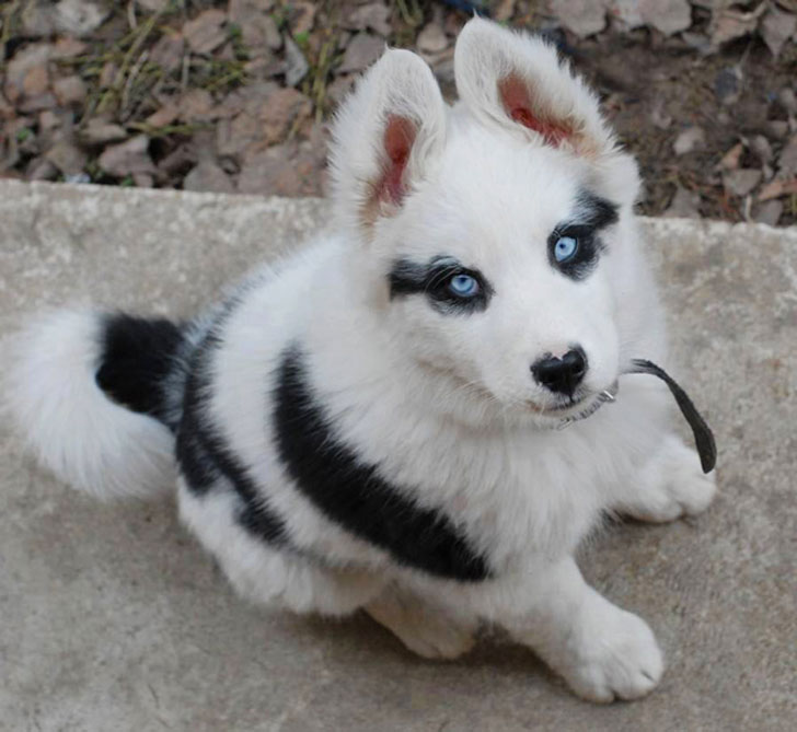 unusual animal markings